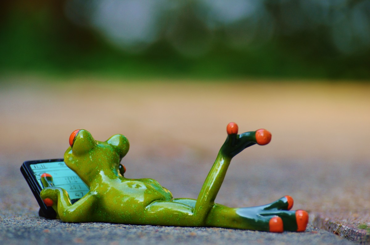 frog_computer_relaxed_figure_funny_rest_relaxation_lying-861679